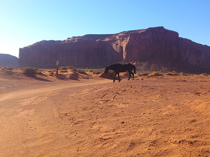 Poney indien Monument Valley