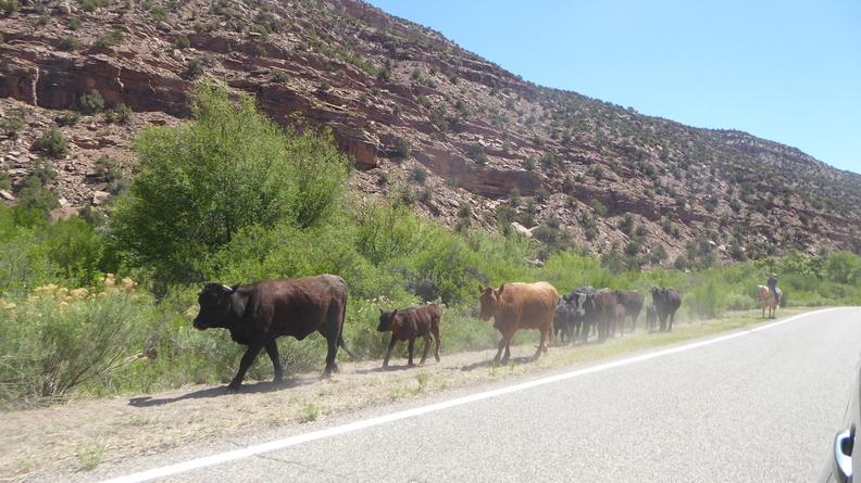 Veaux vaches ...